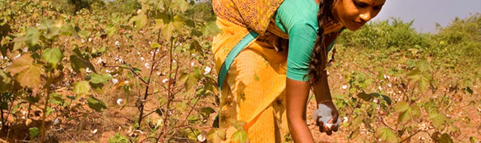 Re-thinking an organic cotton supply chain in India